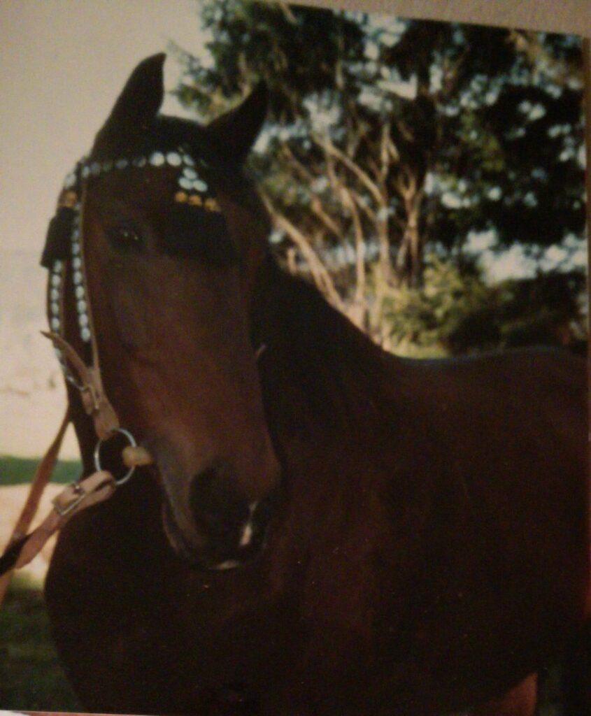Unser erstes Pferd Jupiter